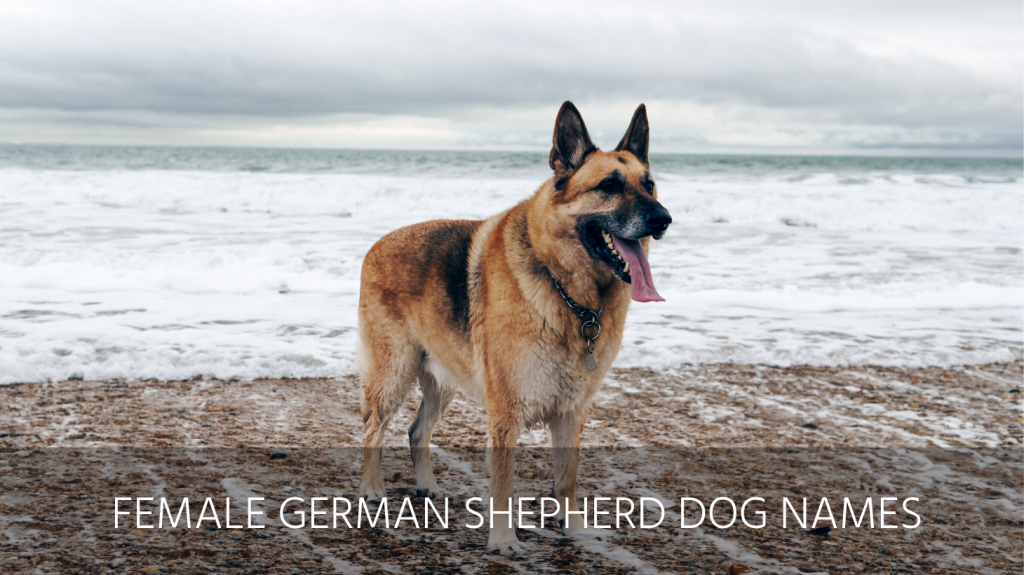 female german shepherd dog names