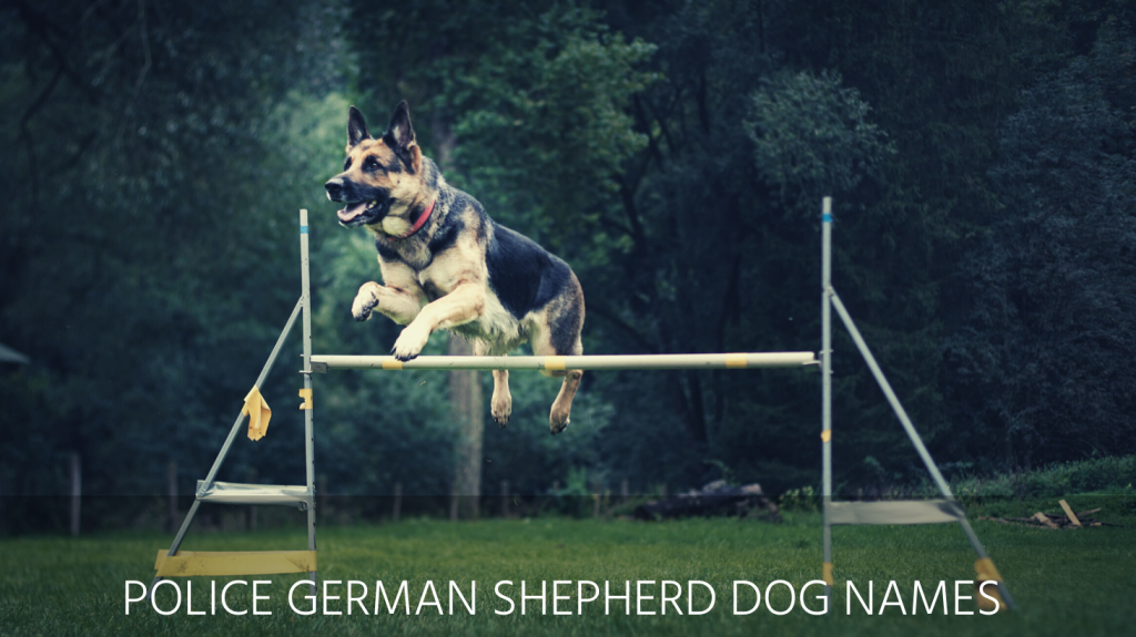 police german shepherd dog names