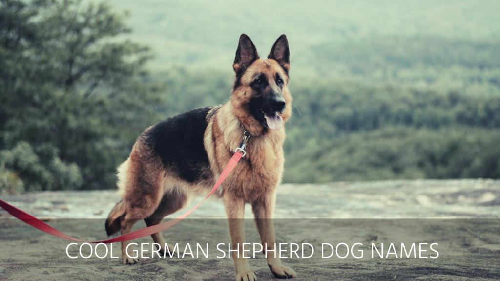 cool german shepherd dog names