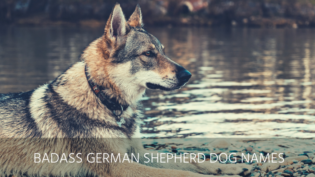 badass german shepherd dog names