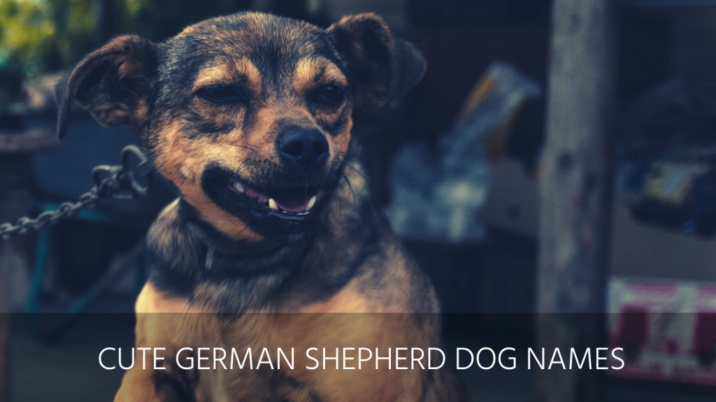 cute german shepherd dog names