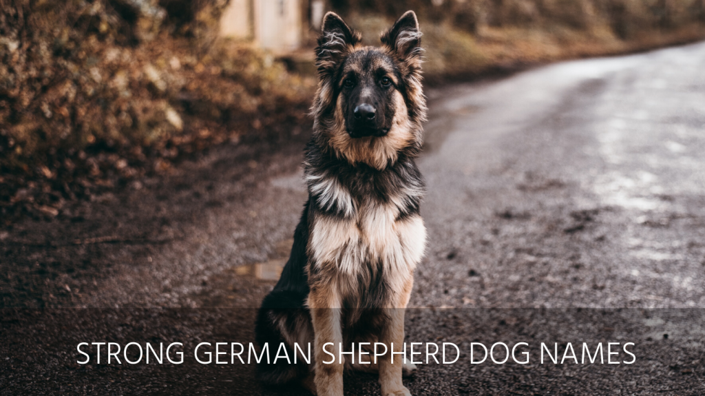 strong german shepherd dog names