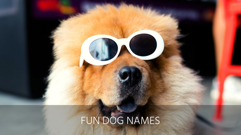 fun dog names