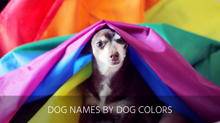 colorful dog names