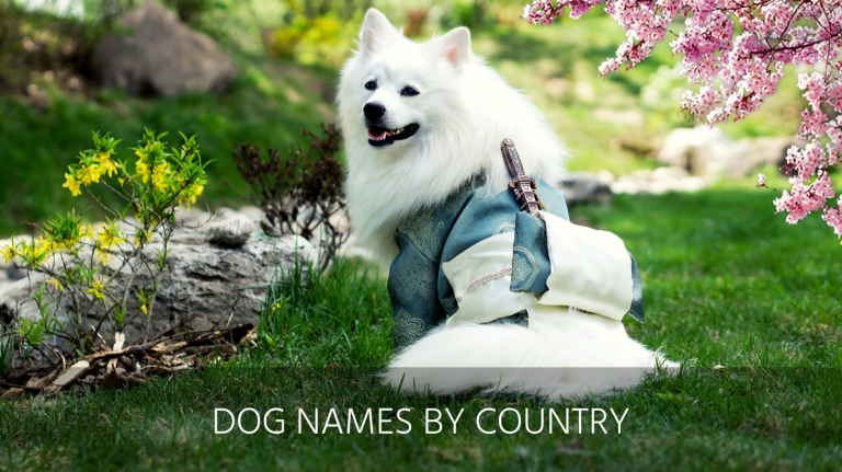 dog names by country