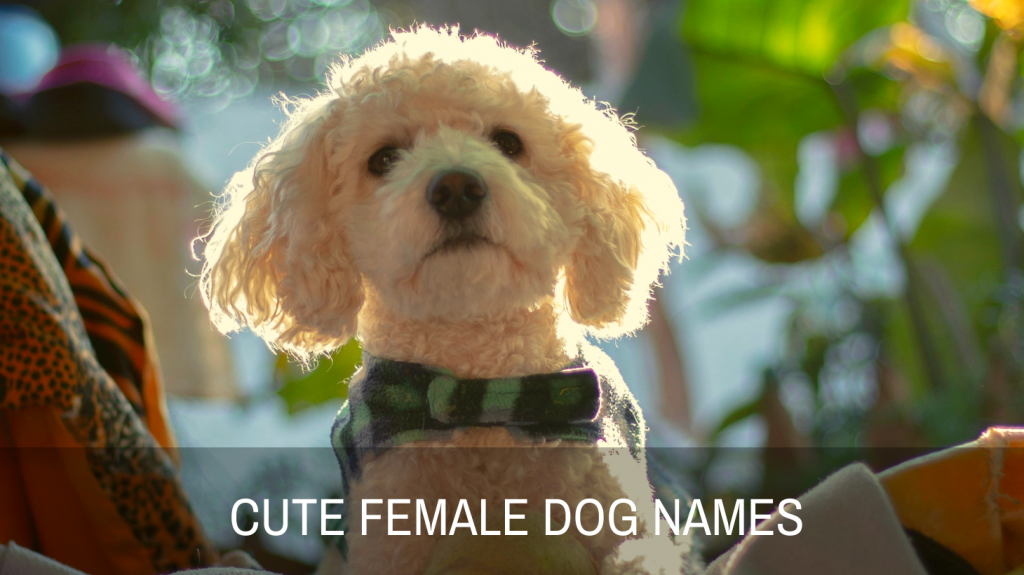 Cute Names For Female Dogs