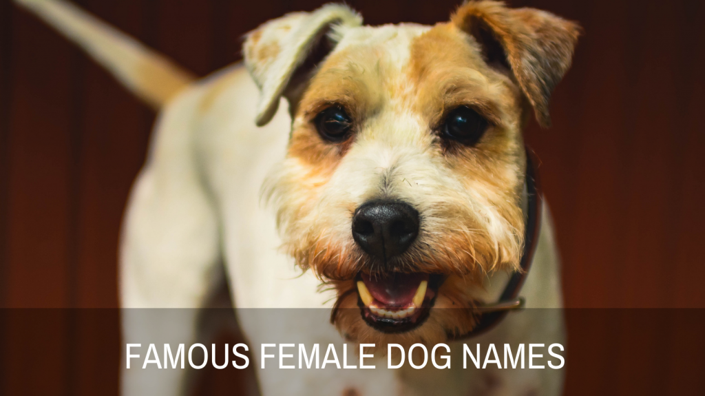 Famous Names For Female Dogs