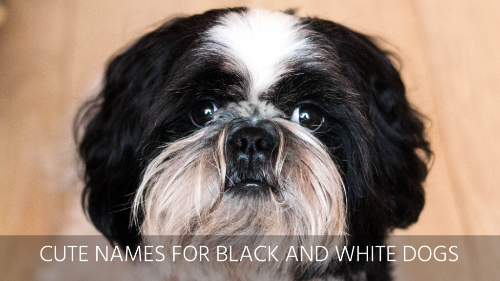 best black and white dog names