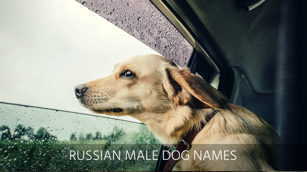 best russian dog names