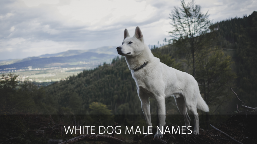 white dog male names