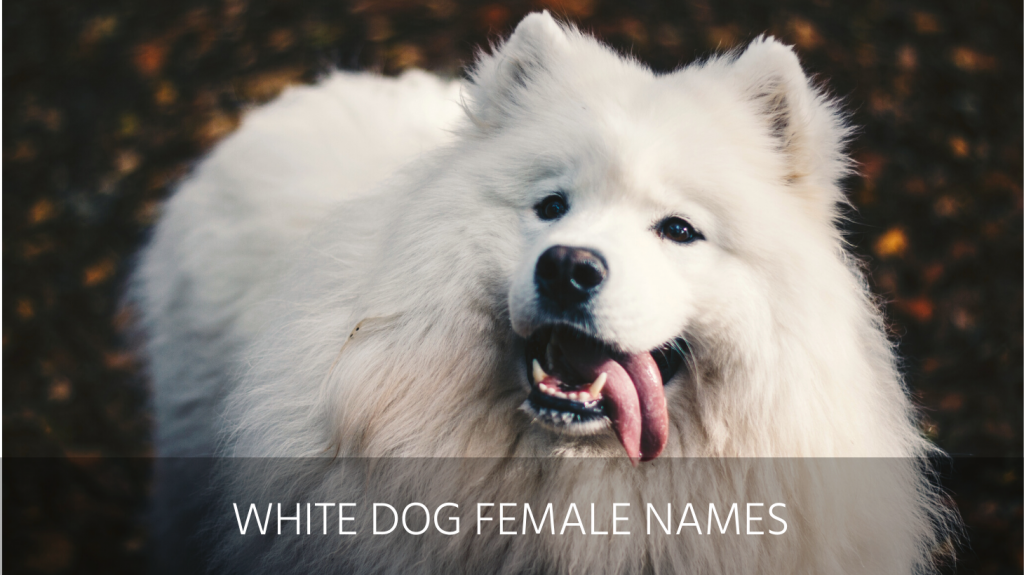 white dog female names