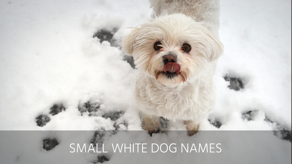 small white dog names