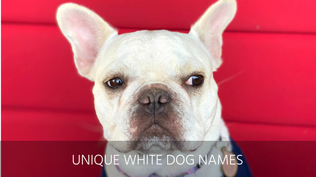 unique white dog names