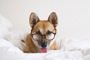 nerdy dog names