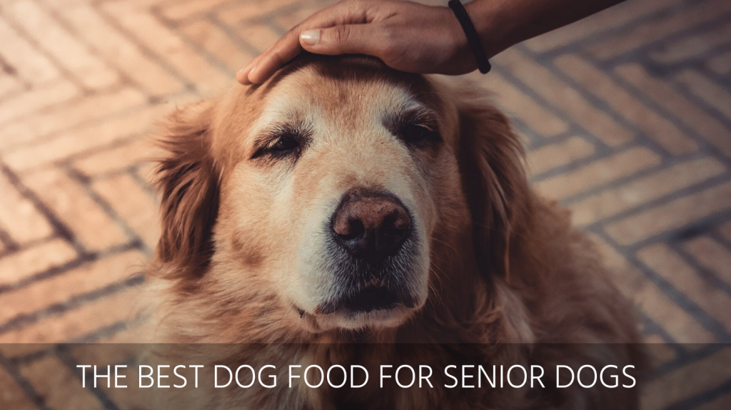 best dog food senior dogs