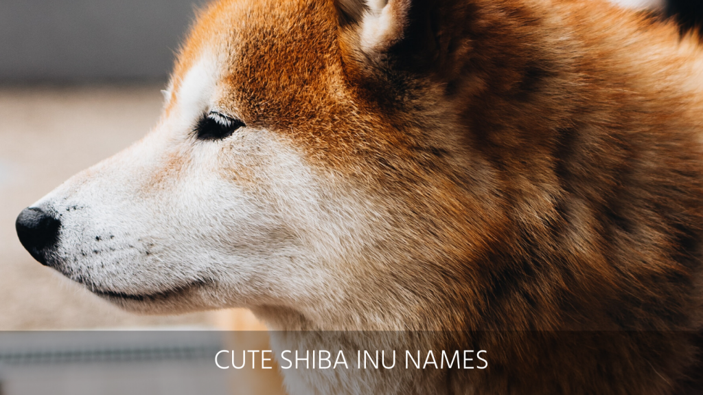Ultimate List Of The Top 300 Shiba Inu Dog Names Good Cute And Japanese Puppy Name Ideas