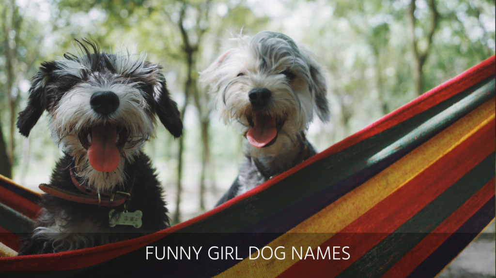 Ultimate List Of The Top 400+ Funny Dog Names – Hilarious, Witty, Silly, Clever Puppy Name Ideas