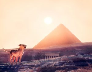 egyptian dog names