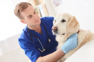 protect dog from coronavirus
